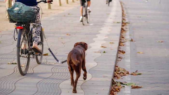 Fahrrad fahren mit Hund hält Mensch und Tier schlank und fit